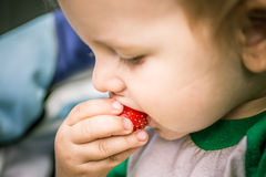 Small child eats appetizing strawberries Stock Images