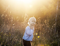 Small child in the field Royalty Free Stock Image
