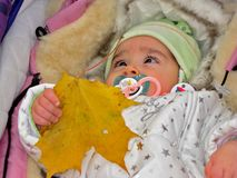 Small child is holding a leaf of yellow maple. A small child in warm clothes lies in a stroller and holding a leaf of yellow maple Royalty Free Stock Image