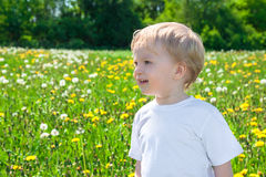 Small child on a meadow with dandelions Royalty Free Stock Image