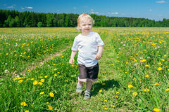 Small child on a meadow with dandelions Stock Photography
