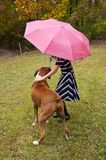 Small child, pink umbrella, striped dress, and boxer bulldog plays in the rain. Royalty Free Stock Image