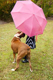 Small child, pink umbrella, striped dress, and boxer bulldog plays in the rain. Royalty Free Stock Photography
