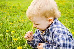Small child  in a plaid shirt. Royalty Free Stock Photo