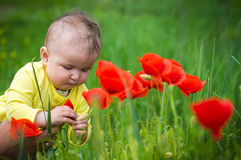 A small child playing in the field Stock Images