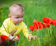 A small child playing in the field Royalty Free Stock Photo