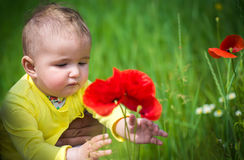 A small child playing in the field Royalty Free Stock Images