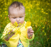 A small child playing in the field Stock Photography