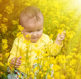 A small child playing in the field Stock Photos