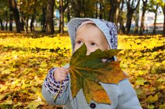 A small child plays with a leaf in an autumn forest. A little child is playing with leaves in an autumn forest. Yellow forest of leaves royalty free stock image