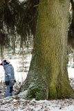 Small child standing by an old big spruce in the forest and looks up royalty free stock images