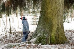 Small child standing by an old big spruce in the forest and looks up royalty free stock image