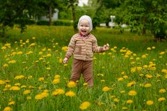 A small child stands in the meadow laughs. A small child stands in the meadow with dandelions and laughs stock photo