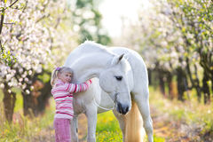 Small child with a white horse in apple orchard. At sunset stock images