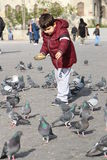 Small children who feed the birds. Stock Images