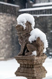 Chinese lion in winter Stock Image