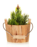 Small Christmas tree in bucket Stock Photography