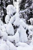 Small christmas tree covered with snow Royalty Free Stock Photography