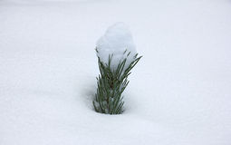 Small Christmas tree covered with snow up to the top Stock Images
