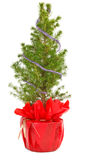 Small christmas tree in decorative pot Royalty Free Stock Image