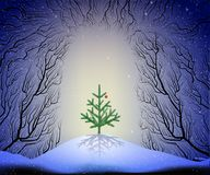 Small Christmas tree growing in the way to the deep fairy forest, Christmas night fairy. Forest cave Stock Image