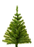Small Christmas tree ready to decorate Royalty Free Stock Photos