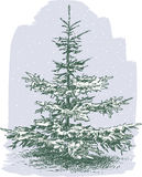 Small Christmas tree Stock Image