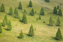 Small Christmas trees Royalty Free Stock Images