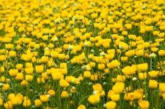 Small chrysanthemum Royalty Free Stock Image