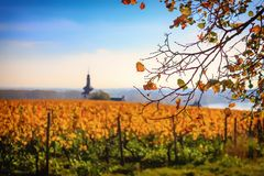 Small church in autumnal vineyard with yellow leaves and blue sk stock photo