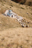 A small church in the Macedonian mountains. A small church of Parumba and herd of sheep in the Macedonian mountains Stock Photos