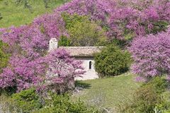 Small church and trees in bloom Royalty Free Stock Image