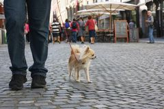 Small city dog royalty free stock images