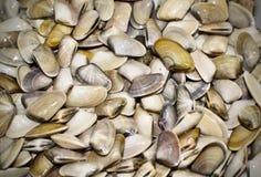 Small clams coquinas typical of Sanlucar de Barrameda. stock photos