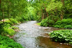 Small Clean River Stock Image