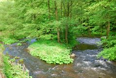 Small clean river flowing through green forest Royalty Free Stock Images