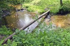 Small clean river in nature reserve forest Royalty Free Stock Images