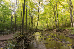 small clear creek running into the woods at Bruce trail in Ontario royalty free stock image