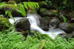 Green Creek. A small clear creek in the tropical rain-forest of Big Island, Hawaii, USA Royalty Free Stock Photos