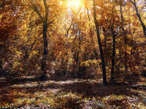 Small clearing in the autumn forest lit by the sun Royalty Free Stock Photo