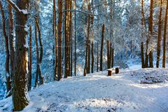 Small clearing in pine forest covered in snow. Sun shining royalty free stock image