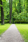 A small clearing with trees, lawn and path. Stock Image