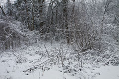Small clearing in the woods with snow on wintertime Stock Images