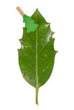 Small clothes pin with a christmas tree on a leaf (butchers broo Stock Photo