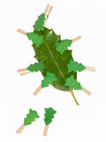 Small clothes pin with a christmas tree on a leaf (butchers broo Stock Photography
