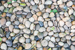 Small coast stone. Small stones in the park background Stock Photo