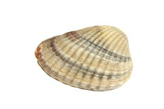 Small cockleshell Stock Image