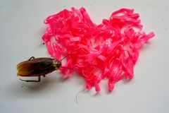 Pink rubber heart shape and small cockroach