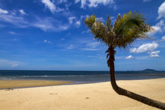 Small coconut bend Royalty Free Stock Photos