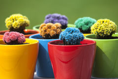 Small colored cacti Stock Photos